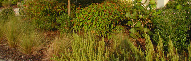 Plant Real Florida Bring Your Landscape To Life With