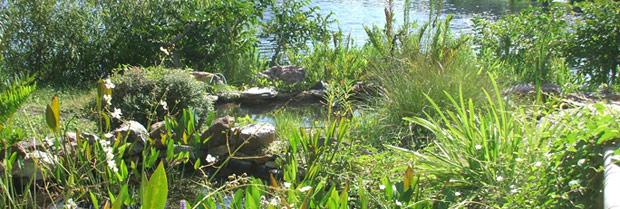 Florida Association Of Native Nurseries Fann