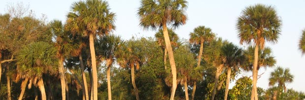 ForestAbundantCabbagePalmsc Palm Tree Home Design on palm tree door design, palm tree rug design, palm tree graphic design, palm tree garden design, palm tree bathroom design, palm tree landscape design, palm tree living room design, palm tree logo design,