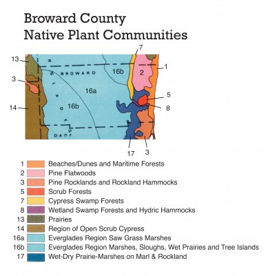 Broward County is one of our most heavily urbanized areas. Yet it is home to nearly a dozen native plant communities, as shown on this close-up view of the Plant Communities Map. The light blue swath is Everglades. The best example of native coastal landscaping can be found in Hugh Taylor Birch State Park. In Fern Forest, Broward County Parks, a remnant wetland forest can be seen – just a fraction of what was once one of the richest ecosystems in Southeast Florida – a river running through huge Bald Cypress and a forest of tropical trees covered in orchids, bromeliads and ferns.
