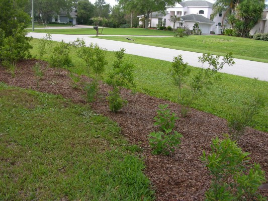 This planting bed terrified an HOA. Why? Because too many of us are sold on turf as the only acceptable landscape aesthetic. Photo by S.D.