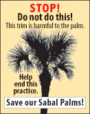 sabal_palm_STOPsmallgrafx